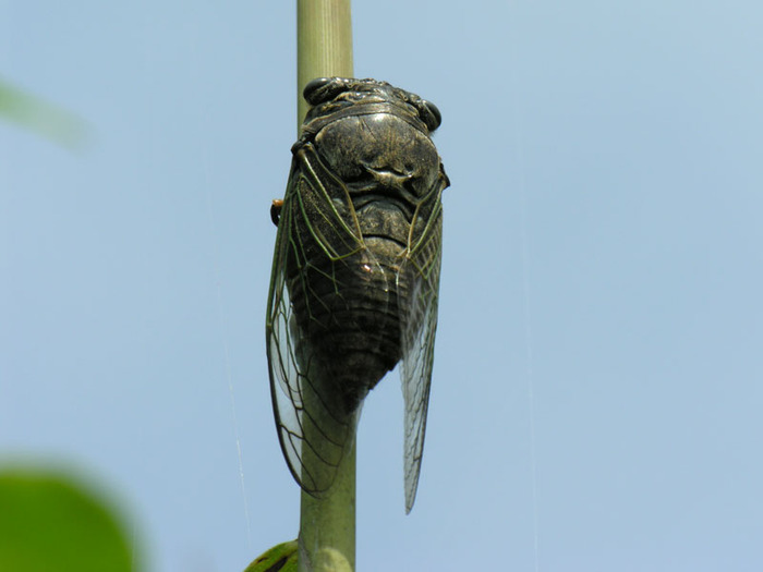 Тараканы, цыкады и прочая живность Автор: Xuga