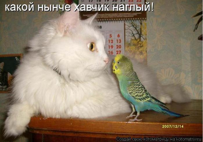 http://img0.liveinternet.ru/images/attach/c/1/55/268/55268725_489408.jpg