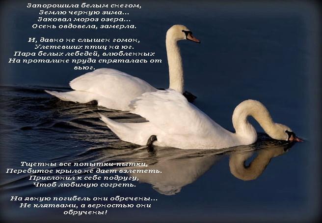 Цитата из лебединого озера
