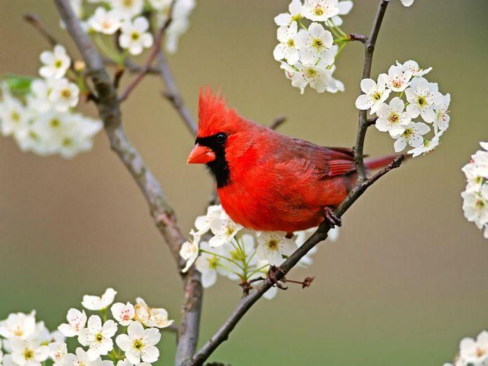 ...Птицы, Вы можете принять посильное участие в жизни