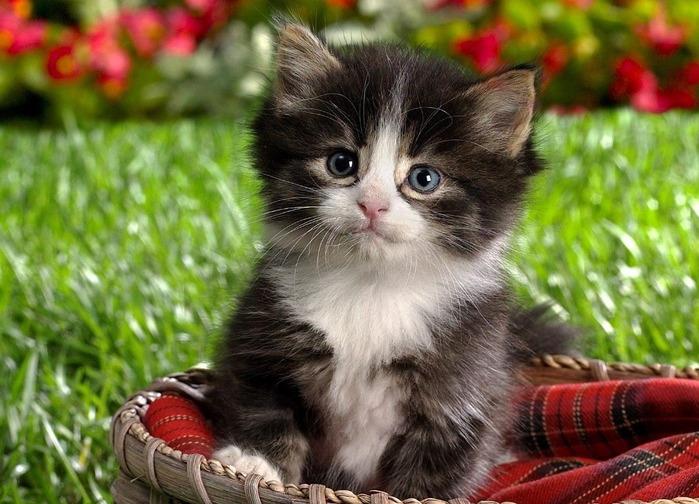 """Все новости.  Очередная порция  """"Рижского бальзама """" для любителей пушистых домашних питомцев - кошек и котят."""