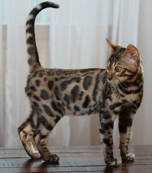 1 марта - Всемирный день котов)).  Так что всех любителей этих забаных...