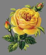 """Схема вышивки  """"Желтая роза """": таблица цветов."""