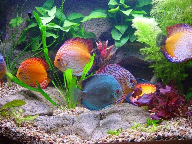 Приму в дар аквариум,можно с рыбками.
