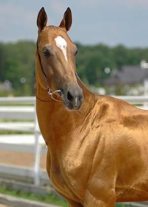 Это - любителям лошадей.  А я обожаю дельфинов.