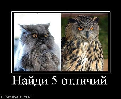 http://img0.liveinternet.ru/images/attach/c/1/56/369/56369804_x_df5024dc.jpg