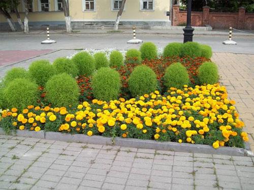 Многолетние цветы для сада в