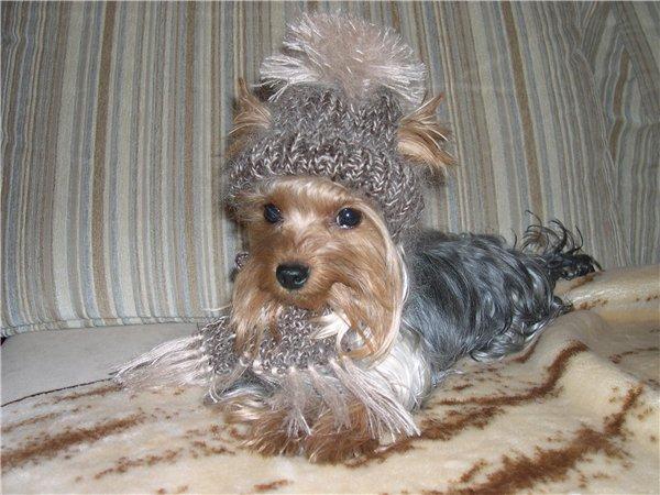 вязание для собак и кошек.
