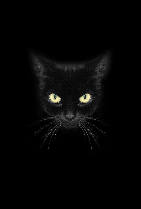 Про чёрных кошек от черной кошки.