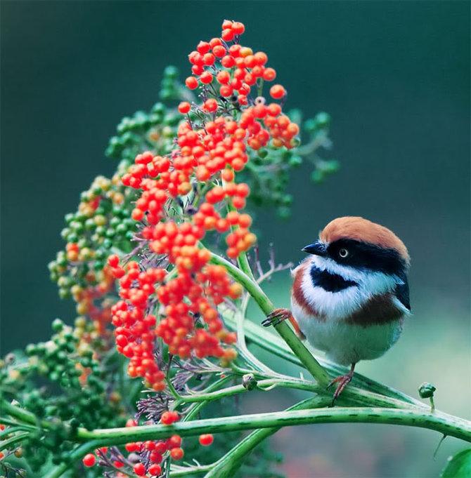 Великолепные фото птиц.  John Soong.