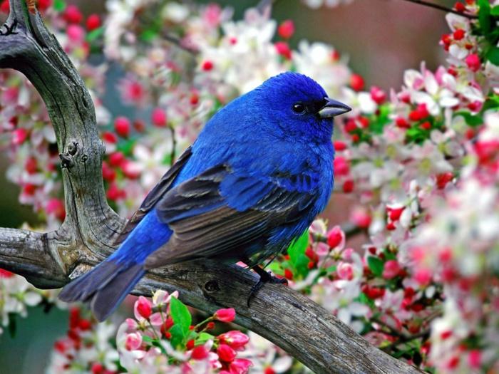 Это не простые, а редкие и необычные птички.  Некоторых из них вы