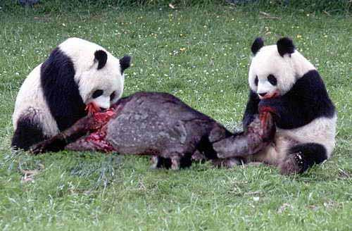 безымянный, панды опасны для человека экранизации