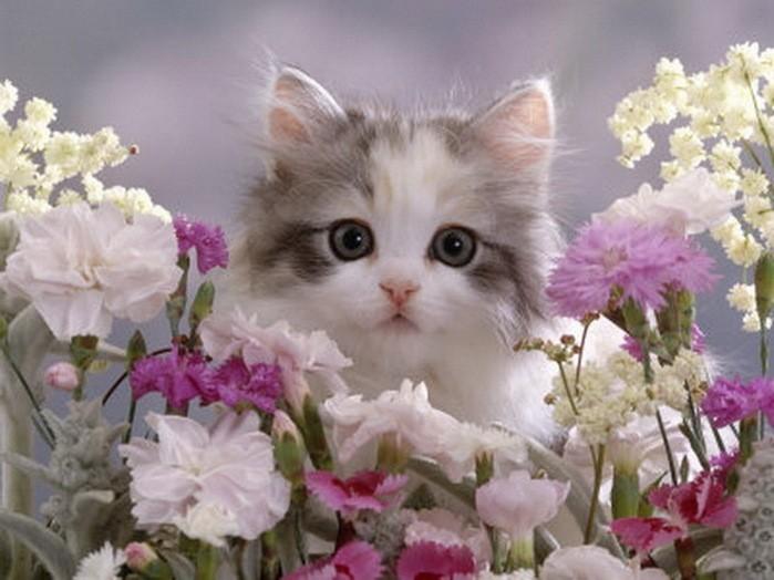 Кошка с цветами открытка с днем рождения 88