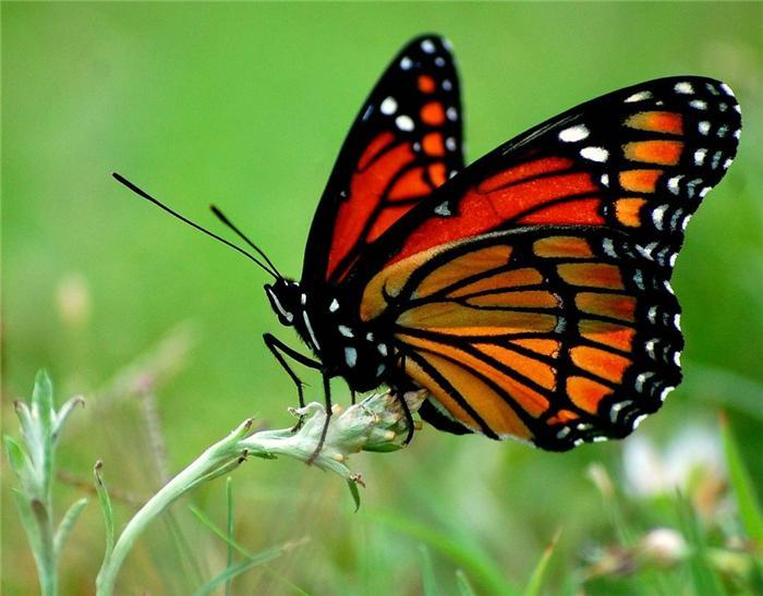 Алина Задорожная butterflystory  Instagram photos and