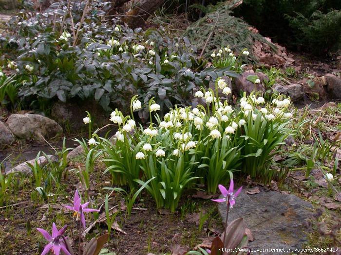 Бордюрные цветы и растения многолетники: фото в 99