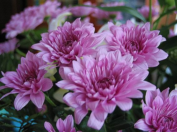 хризантема - Сайт о бисере.