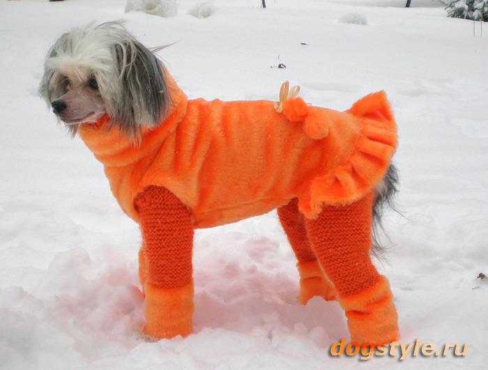Комбинезон для собаки своими руками фото