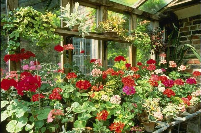 Весь огород цветы в саду и