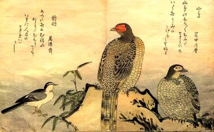 Приглашений: 0. Птицы.