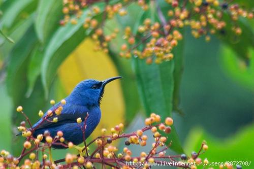 Фотографии красивых птиц.  Мать природа в фотографиях.  Бой снежками.