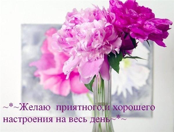 приятного картинки и всем настроения дня хорошего