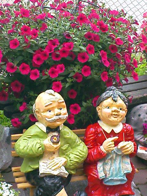купить рассаду цветов в москве.