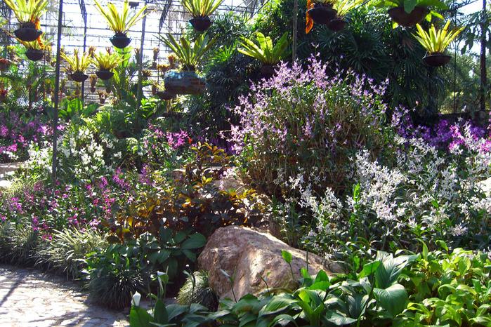 Луковицы Орхидей Из Вьетнама - hammercenter: http://hammercenter.weebly.com/home/lukovici-orhidej-iz-vjetnama