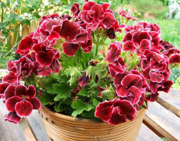 горячий b душ для комнатных растений/b.