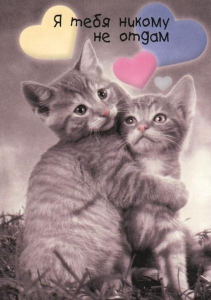Открытка для любимой с котятами 541