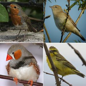 """Перелётные птицы картинки  """" Каталог."""