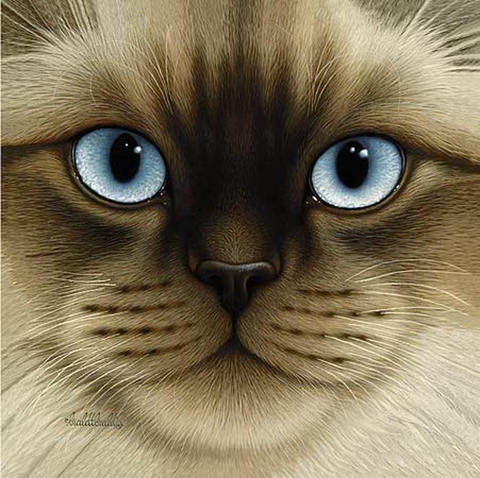Кошки от художника Braldt Bralds.