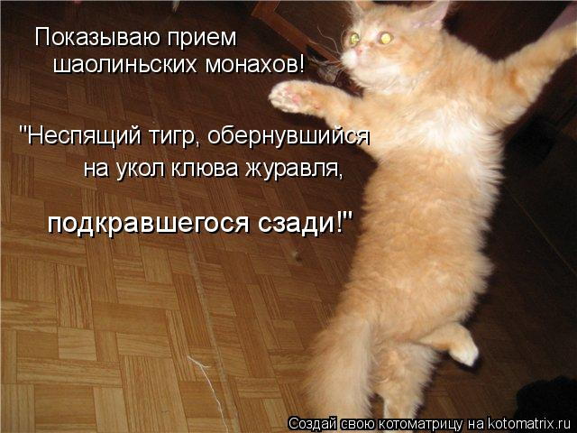 http://img0.liveinternet.ru/images/attach/c/1/60/888/60888872_kotomatrix_82.jpg