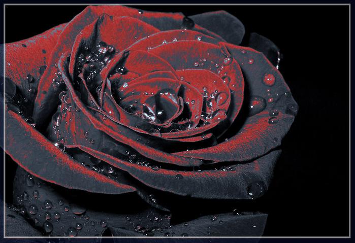 Черная роза 1 серия