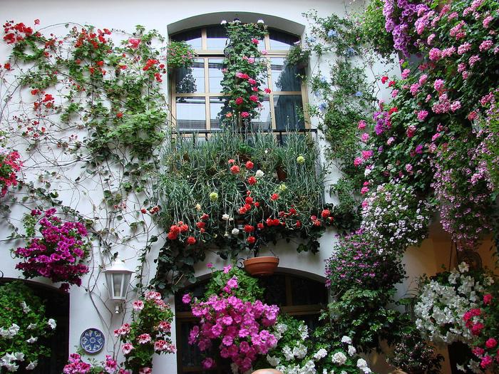 загородный дом в цветах фото - Природа и города - фото и панорамы.