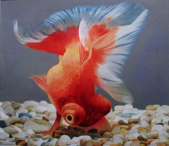 Изображения золотой рыбки.