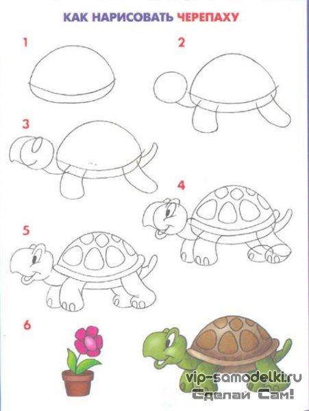 Следующий урок для рисования поэтапно - черепаха.  Рисунок будет немного посложнее.