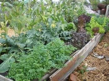 Если на вашем дачном участке для выращивания овощей совсем мало места, разбейте смешанную грядку.