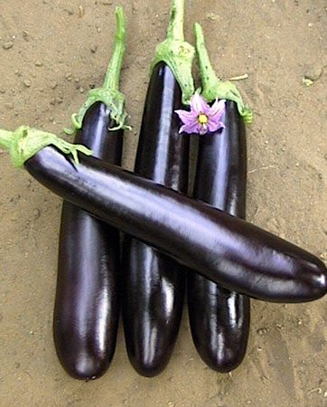 Семена экзотических растений почтой