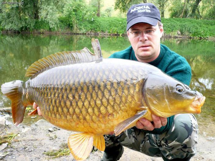 ...для выращивания в регионах Сибири - эта рыба хорошо переносит зимовку и набирает вес.