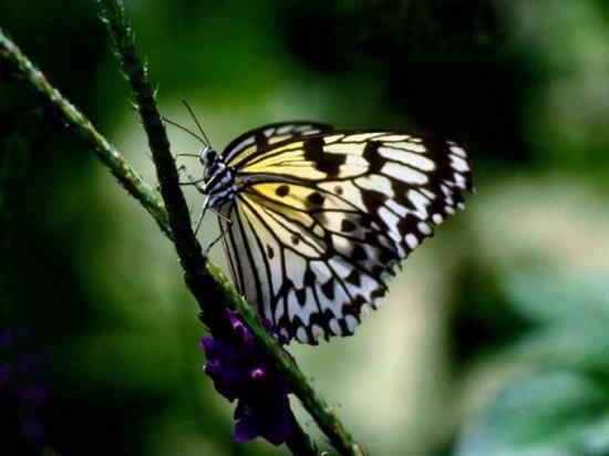 Красивые бабочки фото 23.
