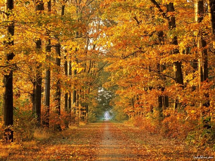 Обои для рабочего стола - Осенняя дорога.