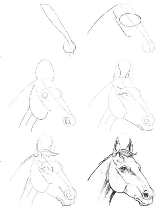 Рисунки карандашом для начинающих детей по схеме.
