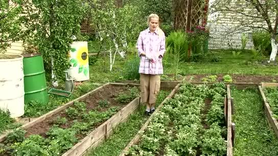 Сад огород клубника видео