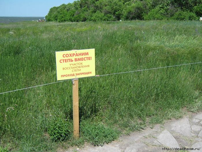 Дивногорье, май 2011, степь, 3 (700x525, 373Kb)