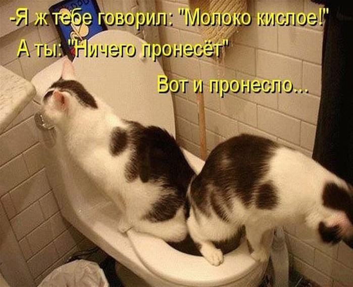 image9374319 (700x568, 100Kb)