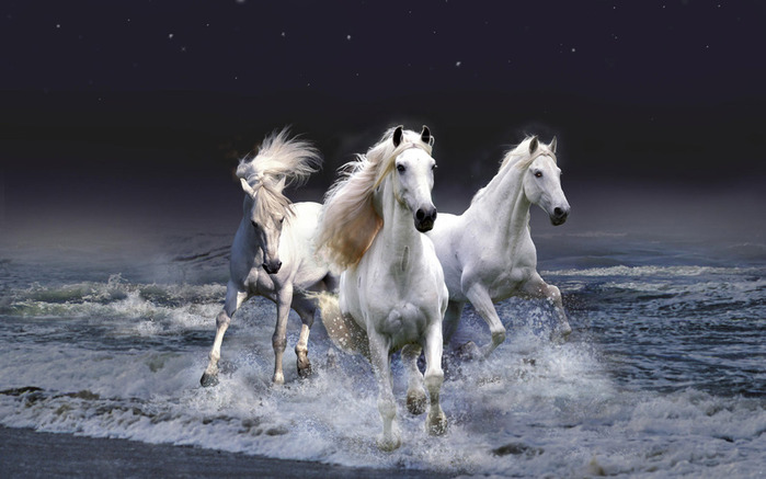 белые лошади (700x437, 85Kb)