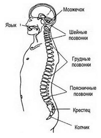 3720816_Meditaciya_Vnytrennyaya_ylibka9 (330x449, 27Kb)
