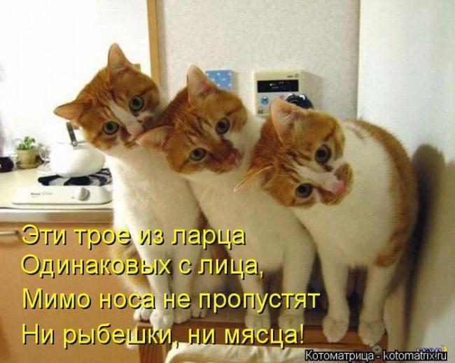 kotomatrix_16_0_0 (650x519, 249Kb)