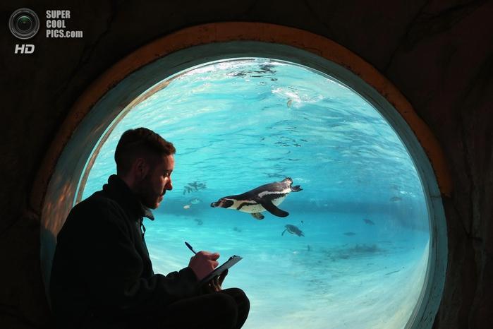 лондонский зоопарк фото 4 (700x466, 205Kb)