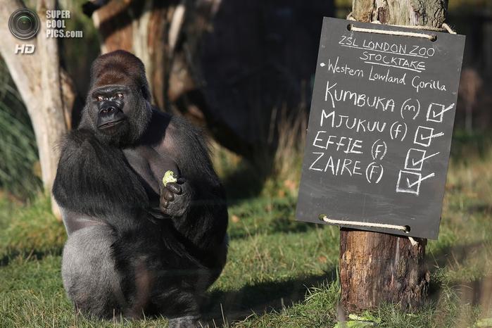 лондонский зоопарк фото 10 (700x466, 262Kb)